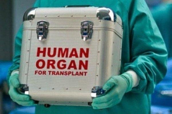 Украинцы поедут в Европу частями: Рада одобрила закон об изъятии органов