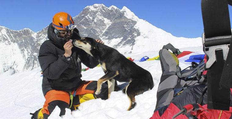 Собака подружилась с альпинистами и отправилась в поход