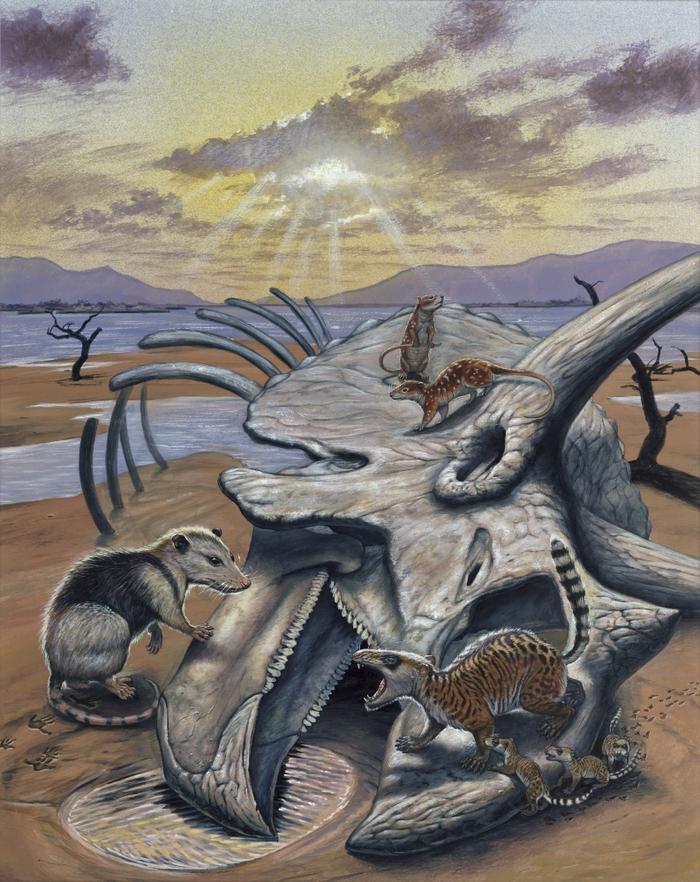 Как выжить если вокруг вымирают динозавры Палеонтология, Вымирание, Эволюция, Адаптация, Динозавры, Длиннопост