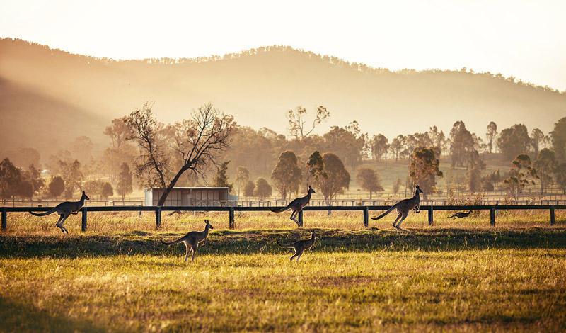 20 дней и 6350 километров — большое путешествие по Австралии