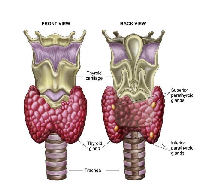 10 симптомов заболевания щитовидной железы