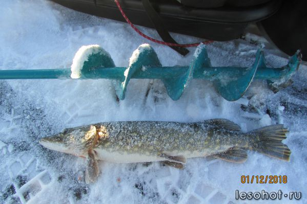 Отчеты о рыбалке. И СНОВА НЕРО!!!!!
