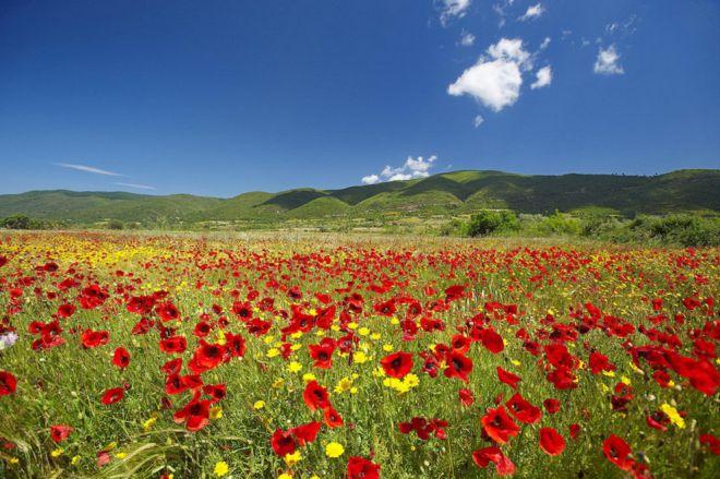 25 причин, почему вам не стоит ехать в отпуск в Грецию