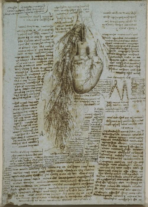 Анатомическое строение человеческого тела в рисунках Леонардо да Винчи.