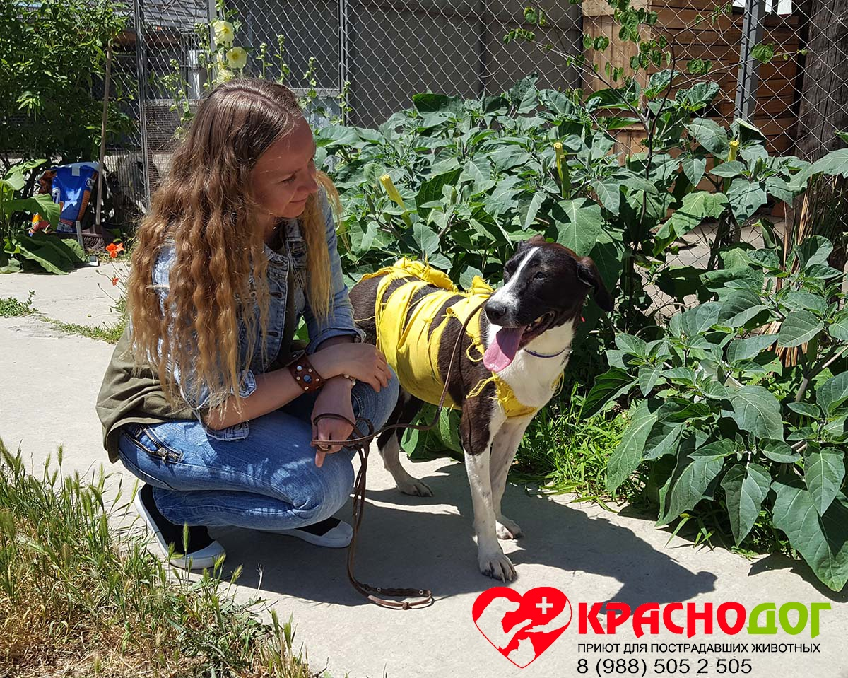 Призвание помогать: волонтёр Виктория – лучший друг собачек из приюта!