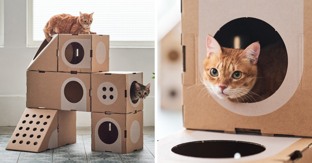 Architect Couple Turns Cardboard Boxes Into Cat City, And The Felines Love It