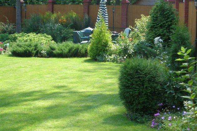 4 варианта превращения сорняков в газон