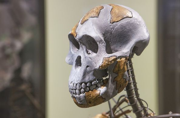 Ученые обнаружили нового предка человека