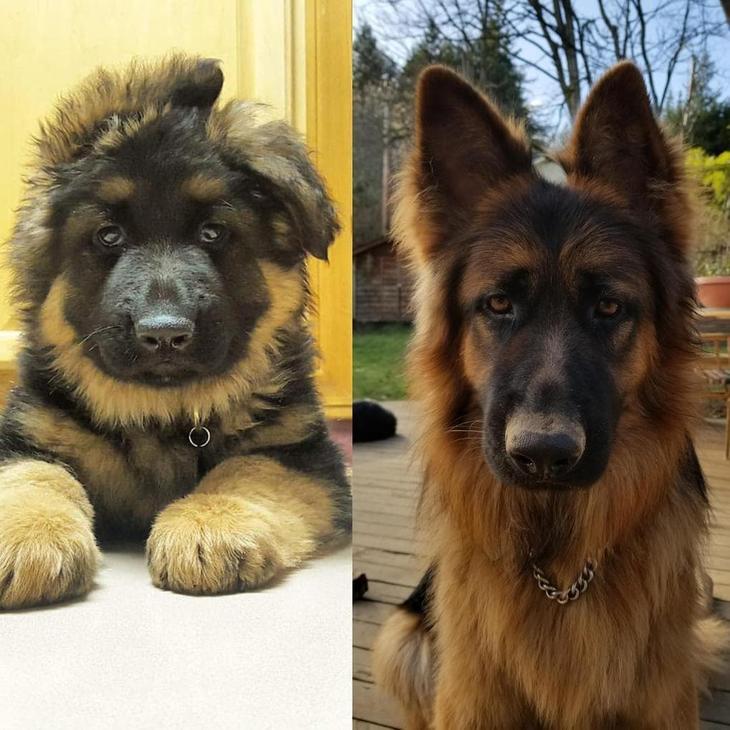 Фотографии собак, владельцы …