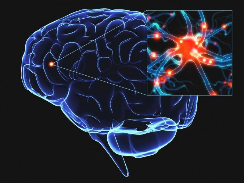 Ваш мозг — старик или ребёнок?