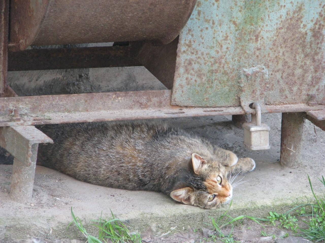 Братья  наши меньше: где кошка выбирает  место для  сна?