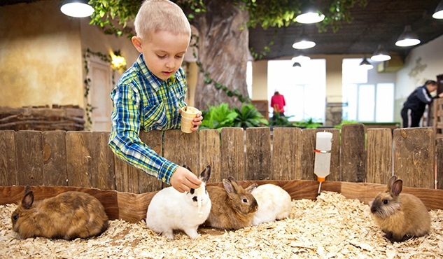 Занятие в живом уголке с кроликами