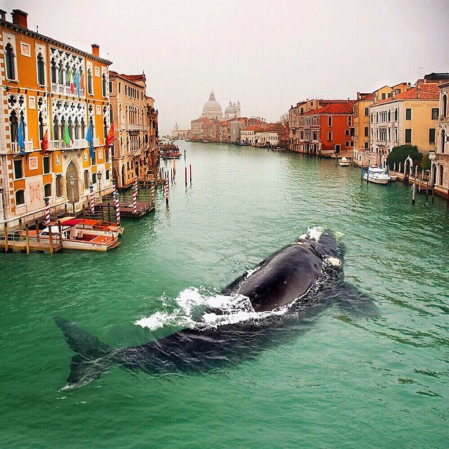 Кит в Венеции. Автор: Robert Jahns.
