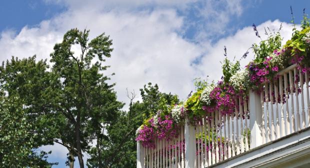 Сад на балконе: какие растения можно выращивать не выходя из квартиры