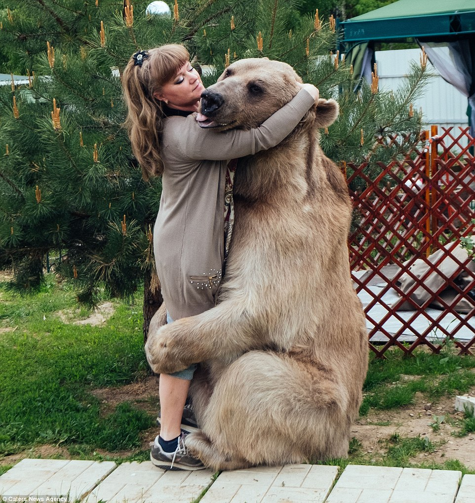 Bear hug: The couple say that because they have known Stepan so long his temperament is extremely gentle and he enjoys giving hugs