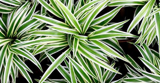 Топ-12 растений для очищения воздуха в помещении