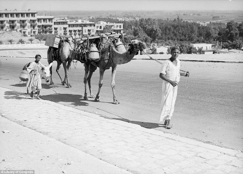 Атмосфера стремительно меняющегося Каира в 1900 – 1936 годах
