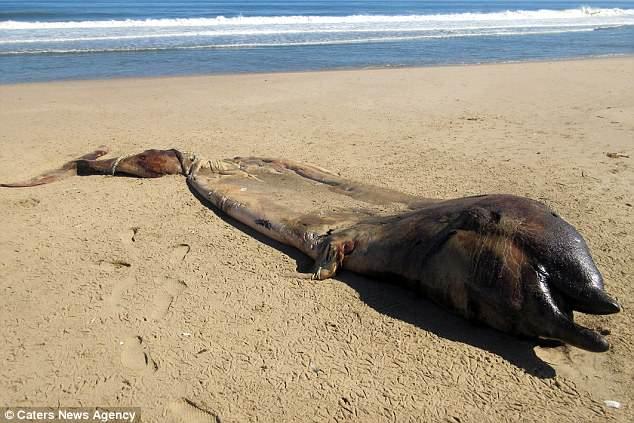 На берег Намибии выбросило р…