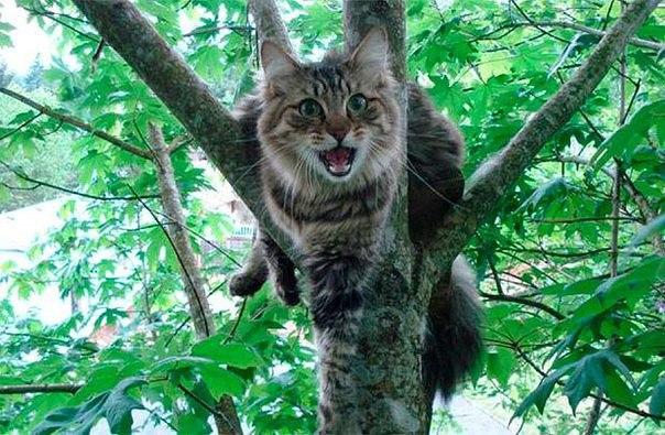 Как снять кота с дерева - самый дельный совет!