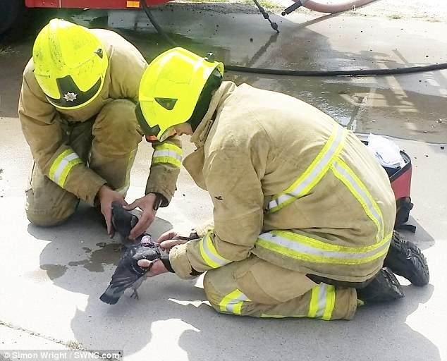 Пожарные реанимировали двух надышавшихся дымом голубей