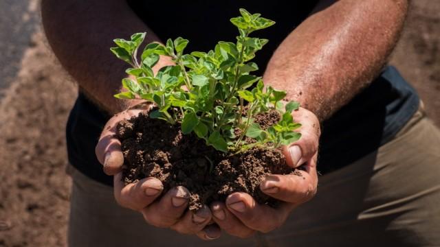Эффективное восстановление почвенного плодородия биопрепаратами