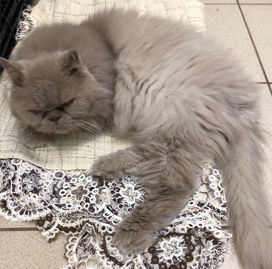 Еле мяукал. Хозяева выбросили кота возле пермского аэропорта ради отпуска