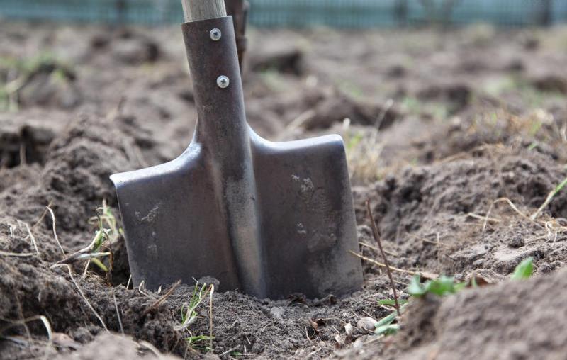 Александр Роджерс. Земельная реформа: Украину продадут по дешёвке