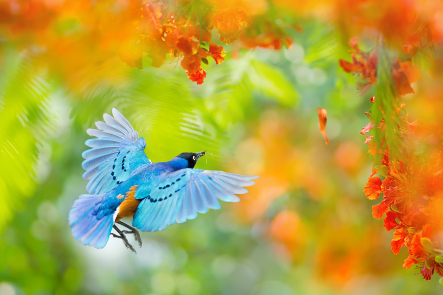 Яркий мир птиц FuYi Chen
