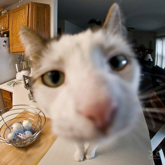 Забавные любопытные кошки, попавшие в объектив фотокамеры