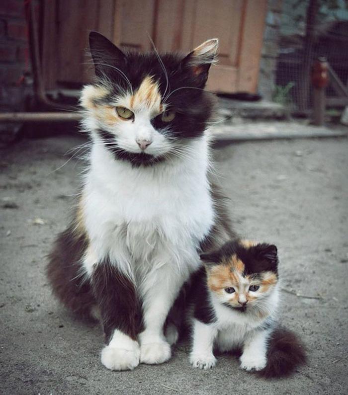 20 кошек и их очаровательные мини-копии