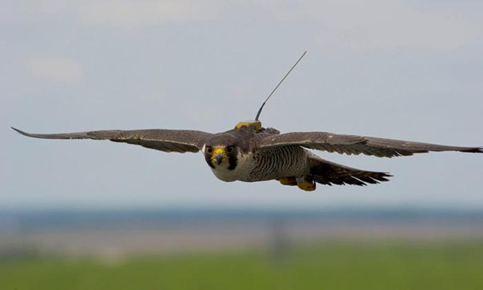 Птицы и авиация