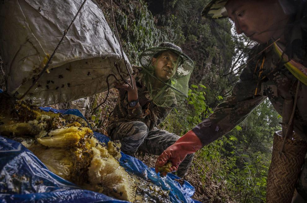 Охотники за медом из Китая