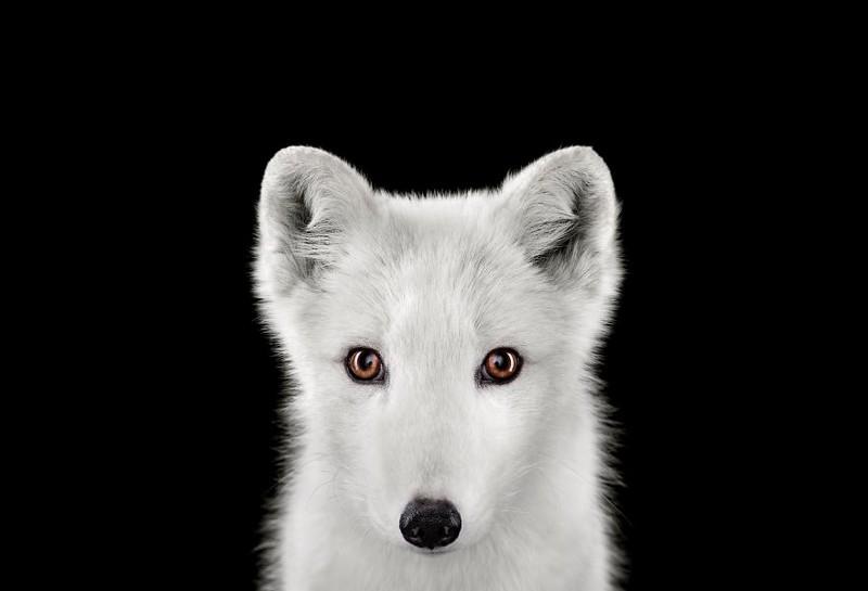 Глаза в глаза. Завораживающие портреты животных