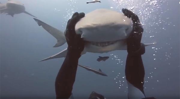 Трогательная нежная дружба акулы и дайвера
