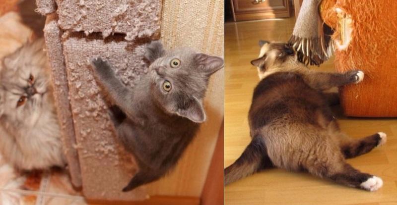 Как раз и навсегда отучить котов драть все подряд