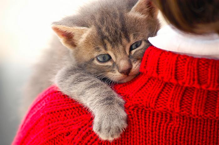 «Кота заводят, чтобы кот был маяком во тьме невзгод…»