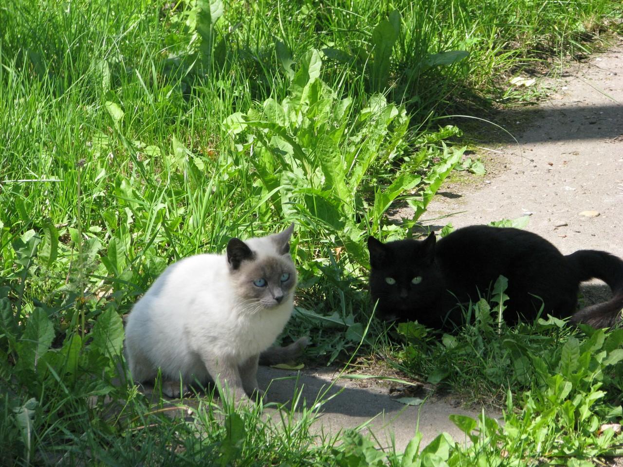 Братья наши меньше: так умеют ли кошки дружить?