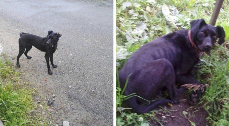 У породистой собаки был хозяин, но она голодала и ночевала на улицах