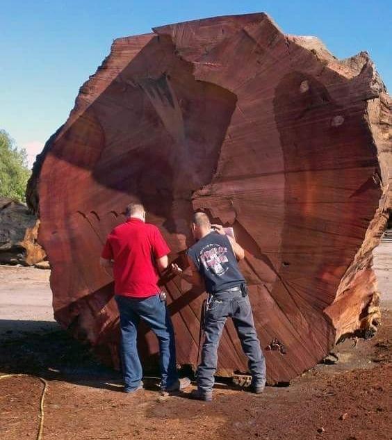 Что мы знаем о деревьях? Вот…