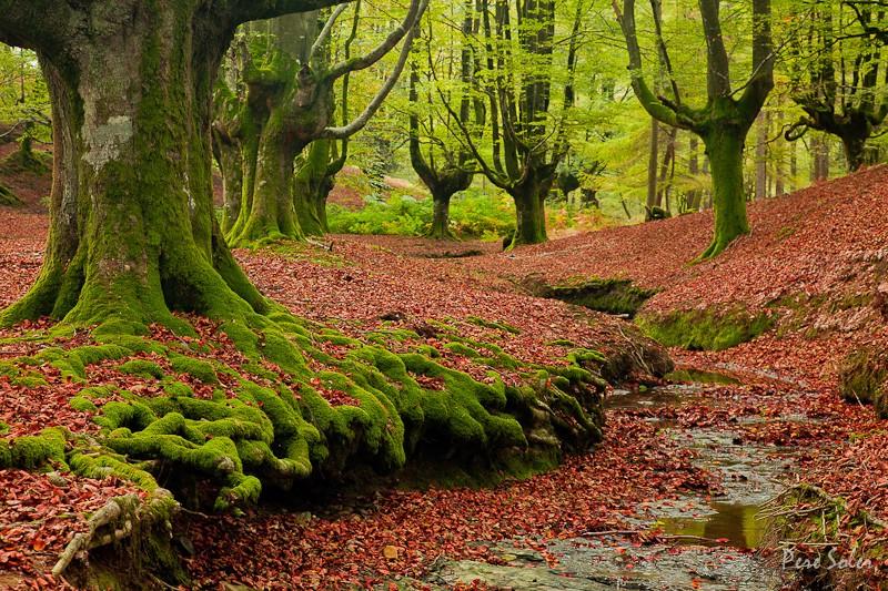 Мир природы Пере Солера