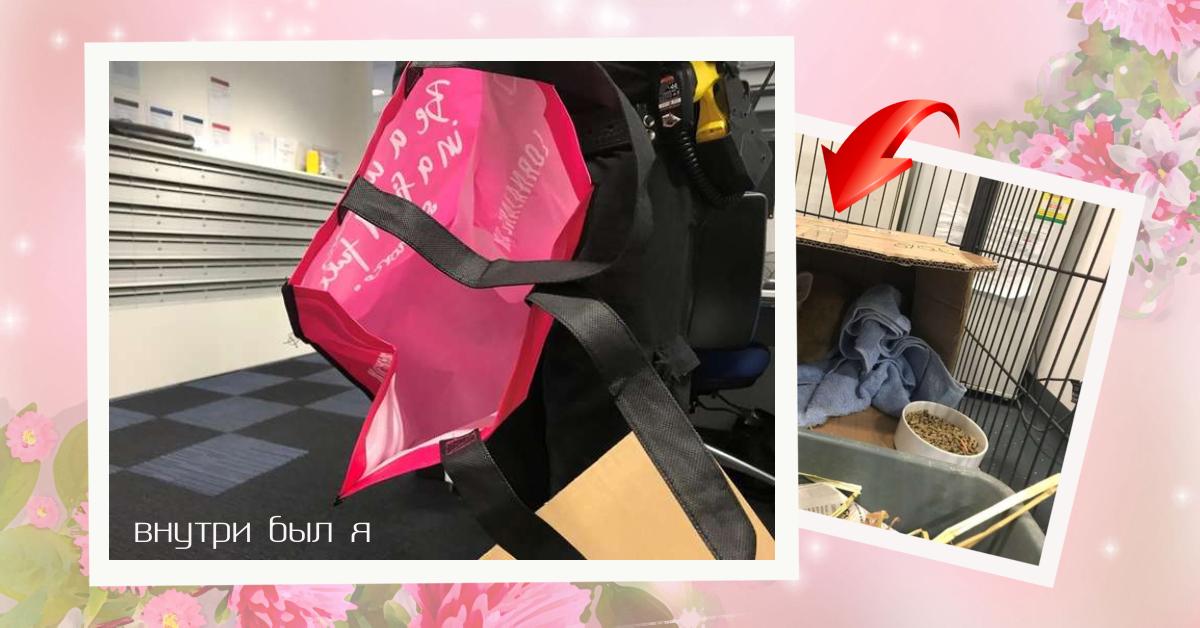 «Не ждали?! И тишина взорвалась смехом!» В аэропорту Аделаиды кто-то оставил подозрительный розовый багаж…