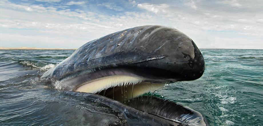 Фотограф потратил 25 лет на то, чтобы запечатлеть величественную красоту китов и дельфинов