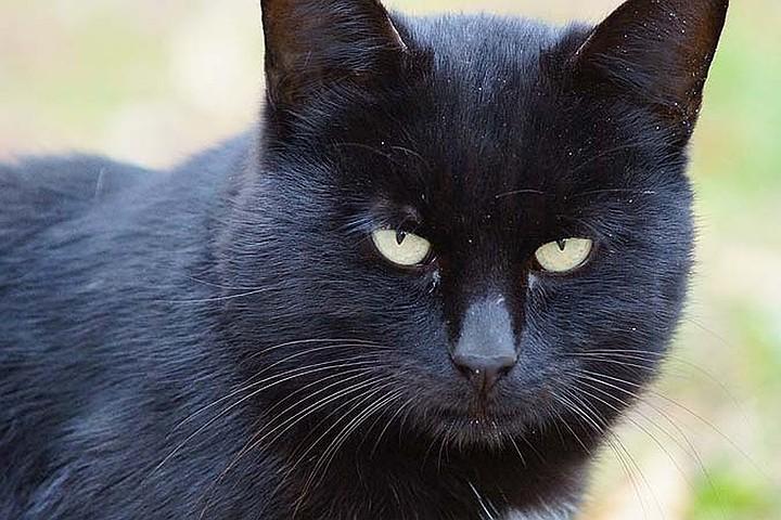 В Италии монахиня попала в ДТП, пытаясь объехать черного кота