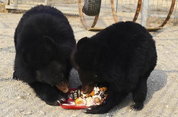 Медведи из Приморья дали прогноз погоды на лето