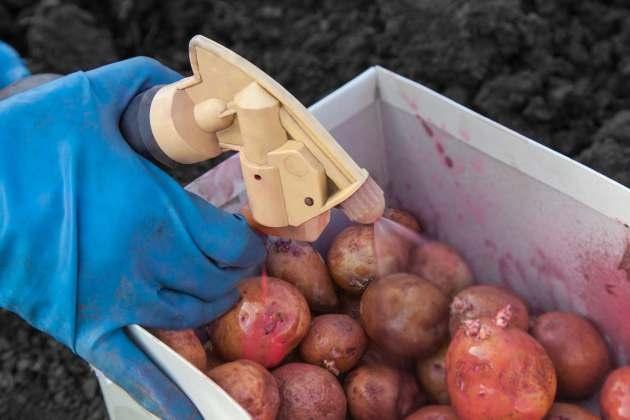Не бойтесь обработать картофель