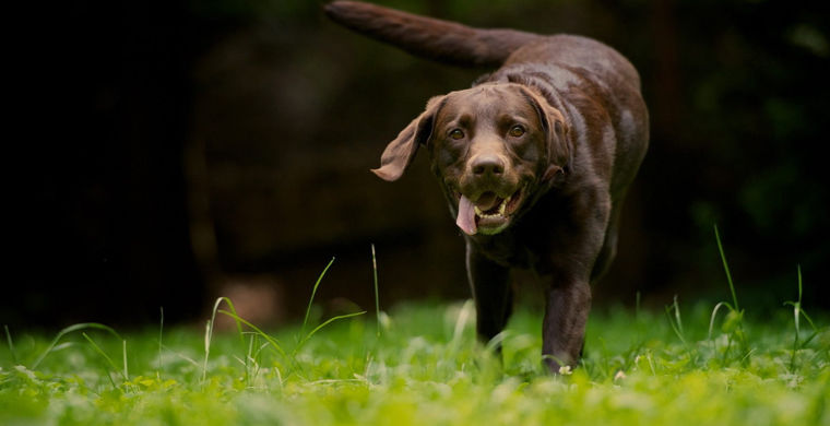 Выяснилось, что сердца собак и их владельцев бьются в унисон
