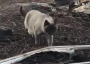 Кошка месяц ждала хозяев на месте сгоревшего дома и дождалась