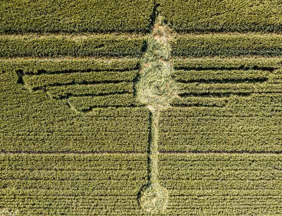 В Уилтшире появился рисунок на поле