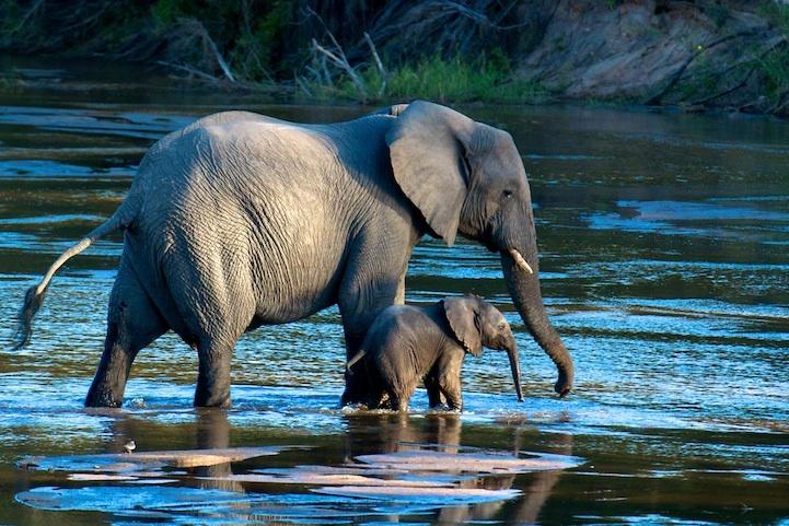 Потрясающие снимки с фотоконкурса от National Geographic