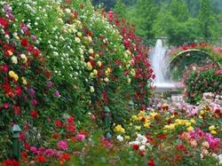 Способы устройства цветника с розами